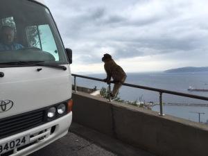 monkey1 (jpeg)